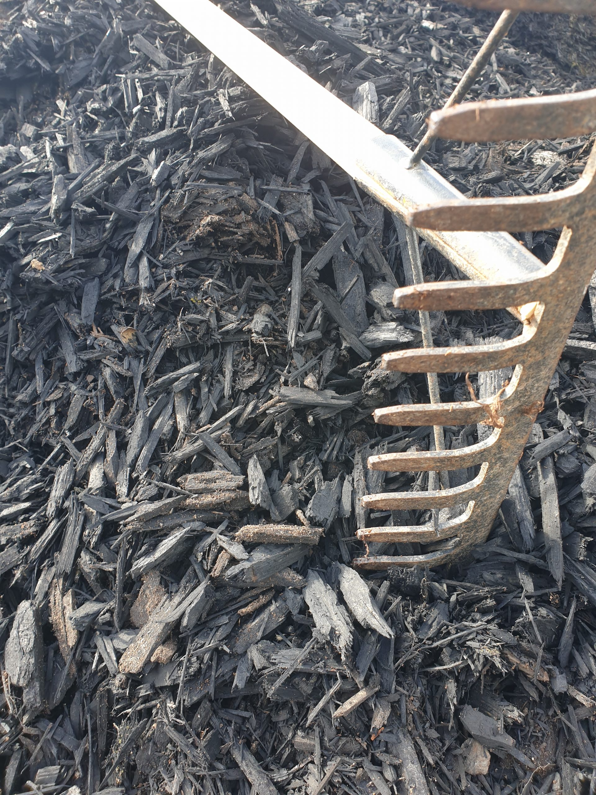 Black Mulch 1