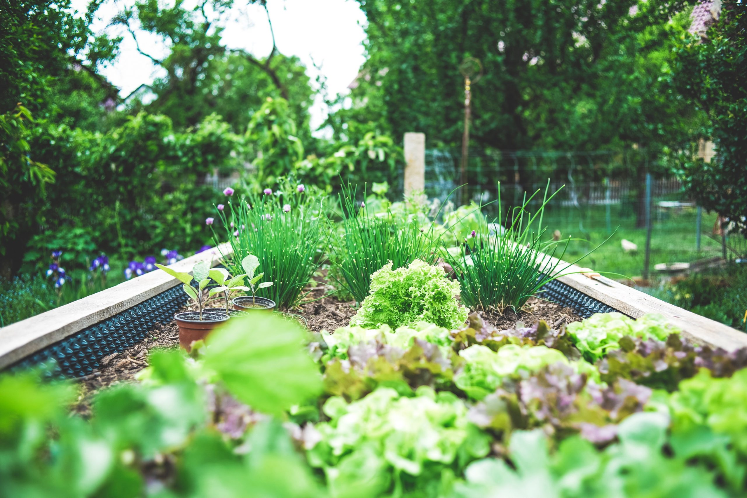 Garden Mix 1